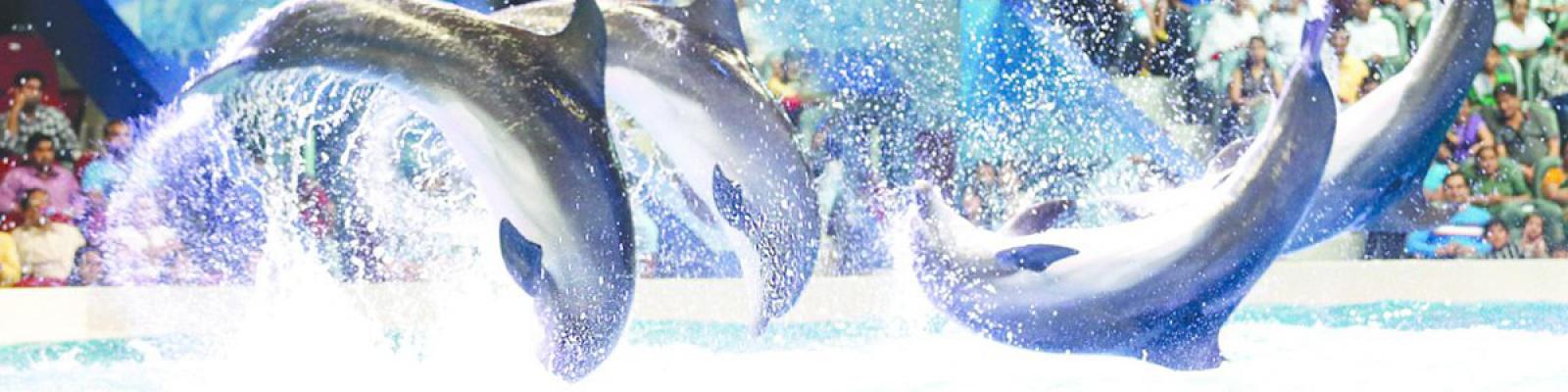 dubai dolphinarium tour, swim with dolphins dubai dolphinarium, dubai dolphinarium swim with dolphins price