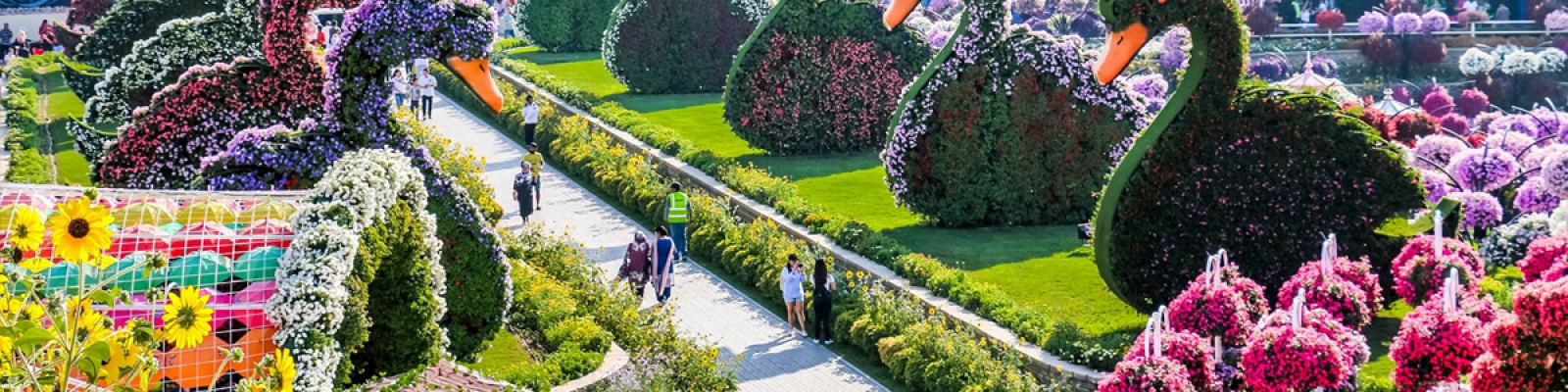 dubai miracle garden tour, dubai miracle garden tour package, dubai global village and miracle garden tour
